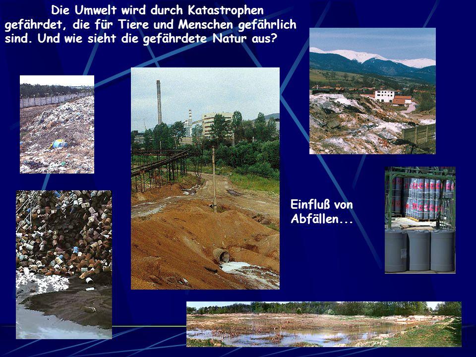Die Umwelt wird durch Katastrophen gefährdet, die für Tiere und Menschen gefährlich sind. Und wie sieht die gefährdete Natur aus
