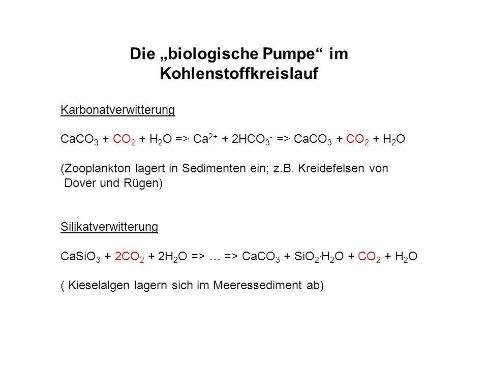 """Die """"biologische Pumpe im Kohlenstoffkreislauf"""