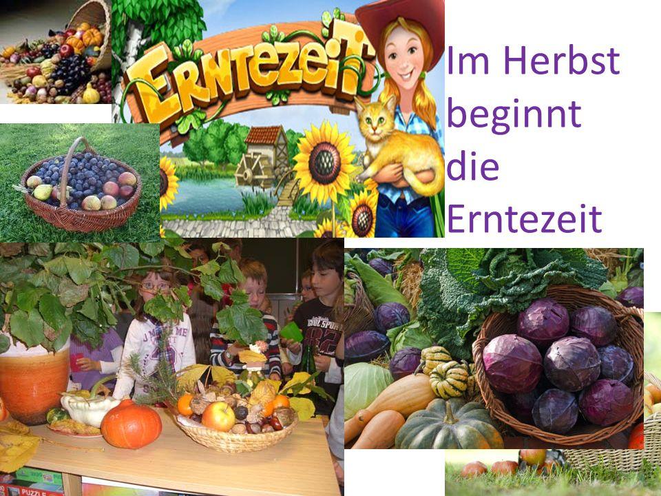 Im Herbst beginnt die Erntezeit