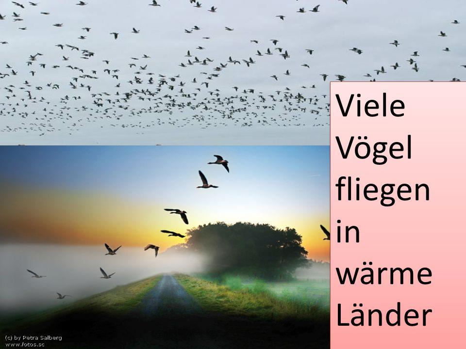 Viele Vögel fliegen in wärme Länder