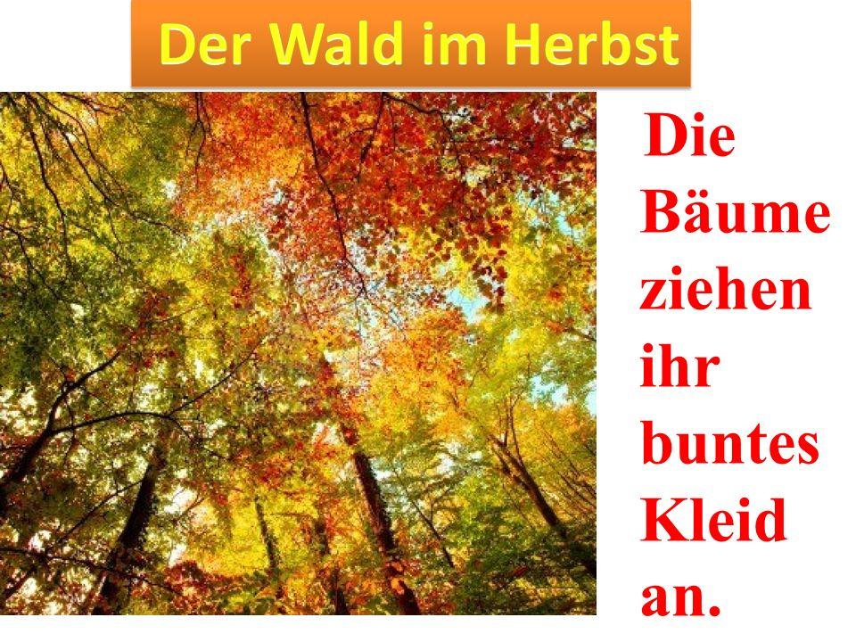 Der Wald im Herbst Die Bäume ziehen ihr buntes Kleid an.