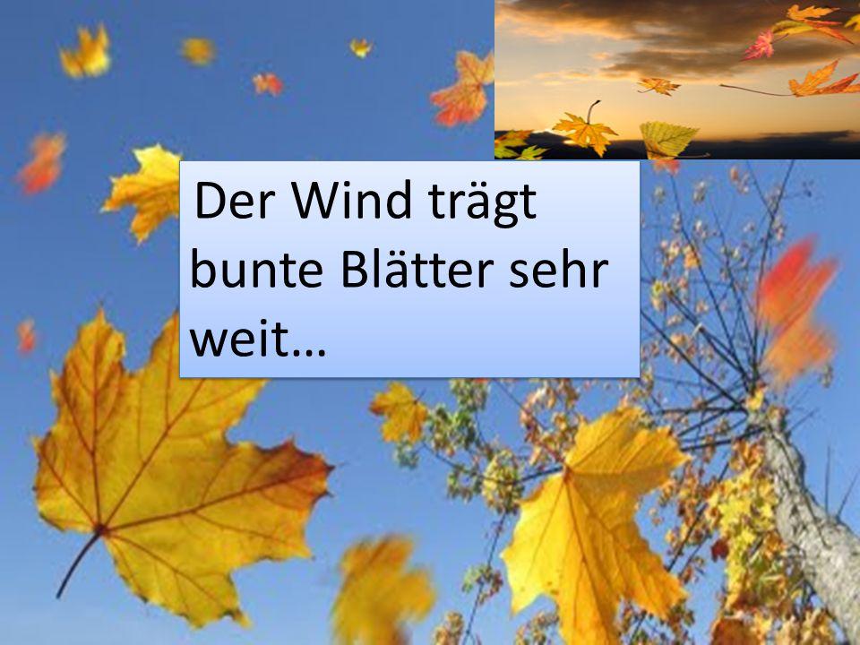 Der Wind trägt bunte Blätter sehr weit…