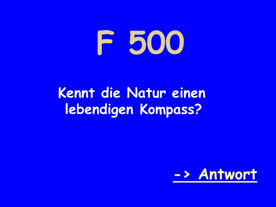 F 500 Kennt die Natur einen lebendigen Kompass -> Antwort