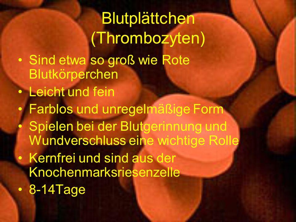 Blutplättchen (Thrombozyten)
