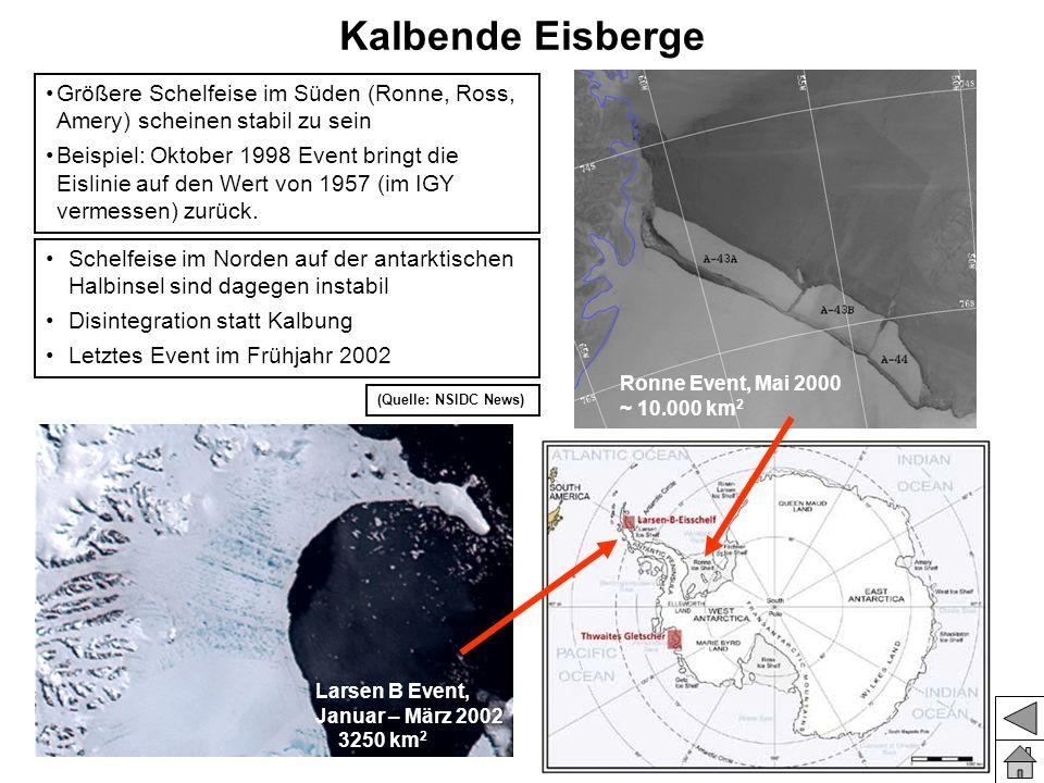 Kalbende Eisberge Größere Schelfeise im Süden (Ronne, Ross, Amery) scheinen stabil zu sein.
