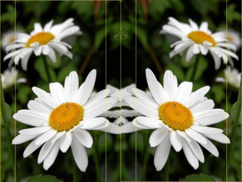 und viel mehr Blumen während des Lebens, denn .. auf den Gräbern sind sie vergebens.