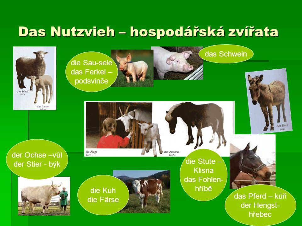 Das Nutzvieh – hospodářská zvířata