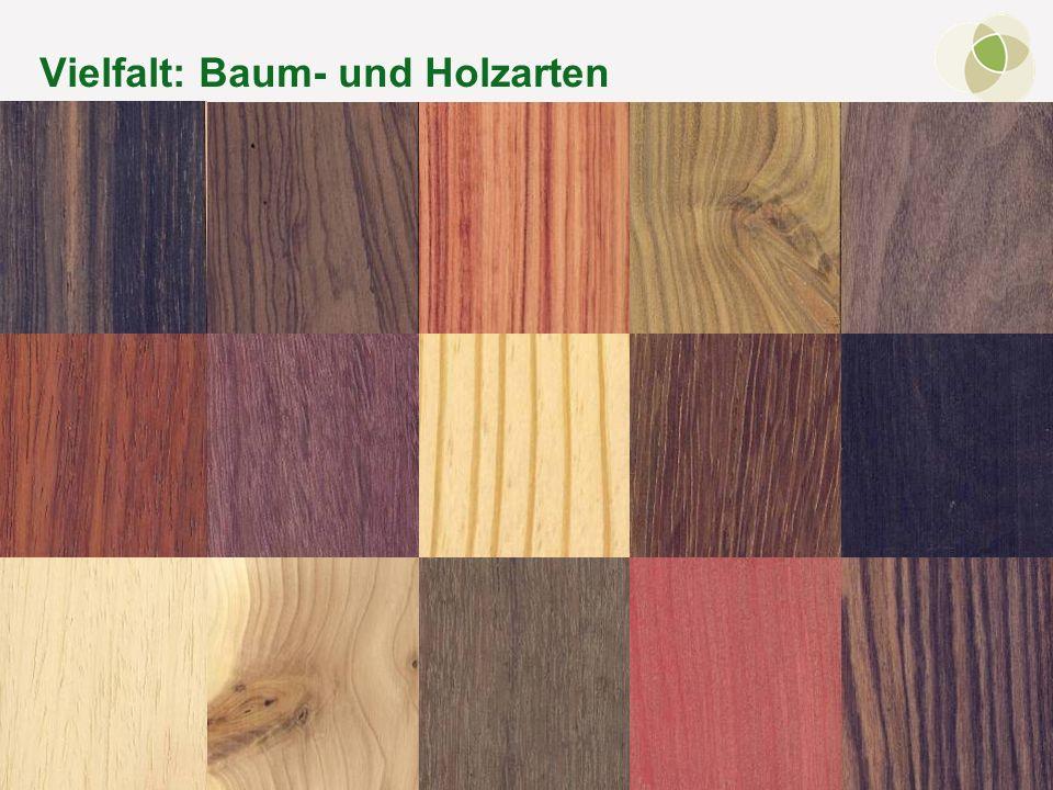 Vielfalt: Baum- und Holzarten