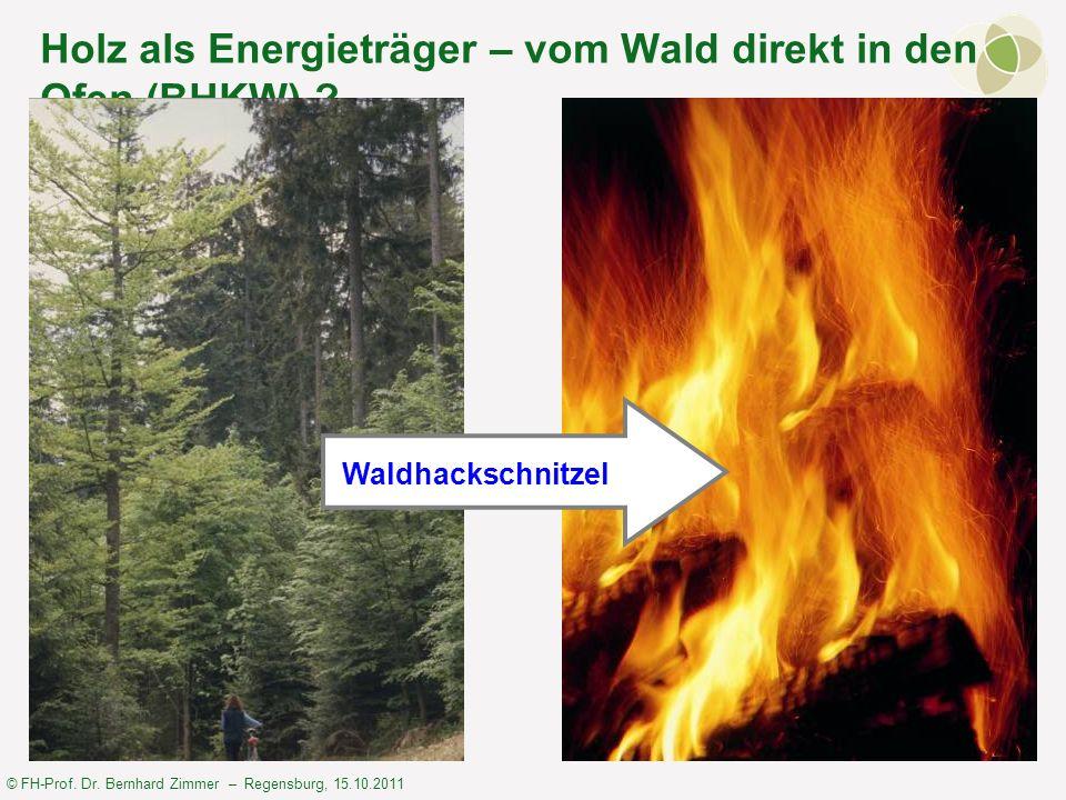 Holz als Energieträger – vom Wald direkt in den Ofen (BHKW)
