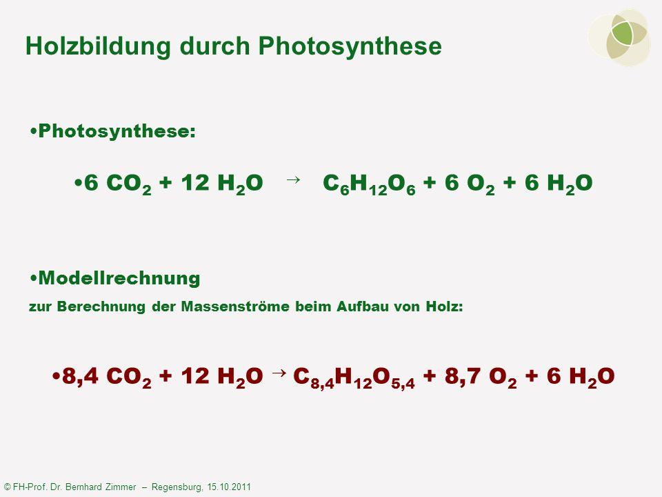Holzbildung durch Photosynthese