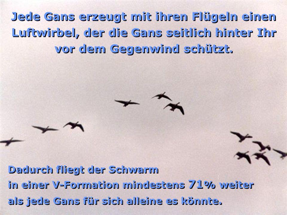 Jede Gans erzeugt mit ihren Flügeln einen Luftwirbel, der die Gans seitlich hinter Ihr vor dem Gegenwind schützt.