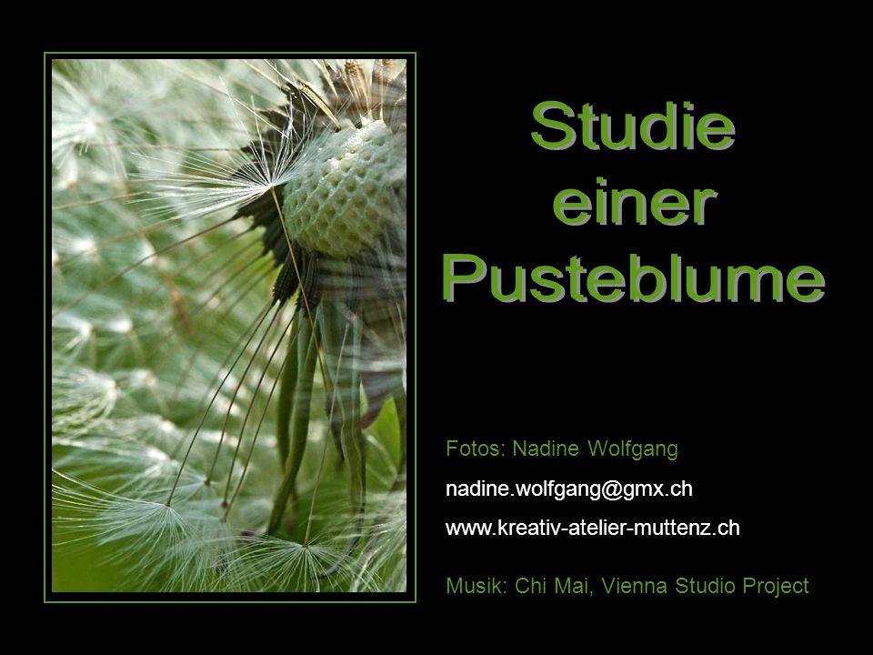 Studie einer Pusteblume Fotos: Nadine Wolfgang nadine.wolfgang@gmx.ch