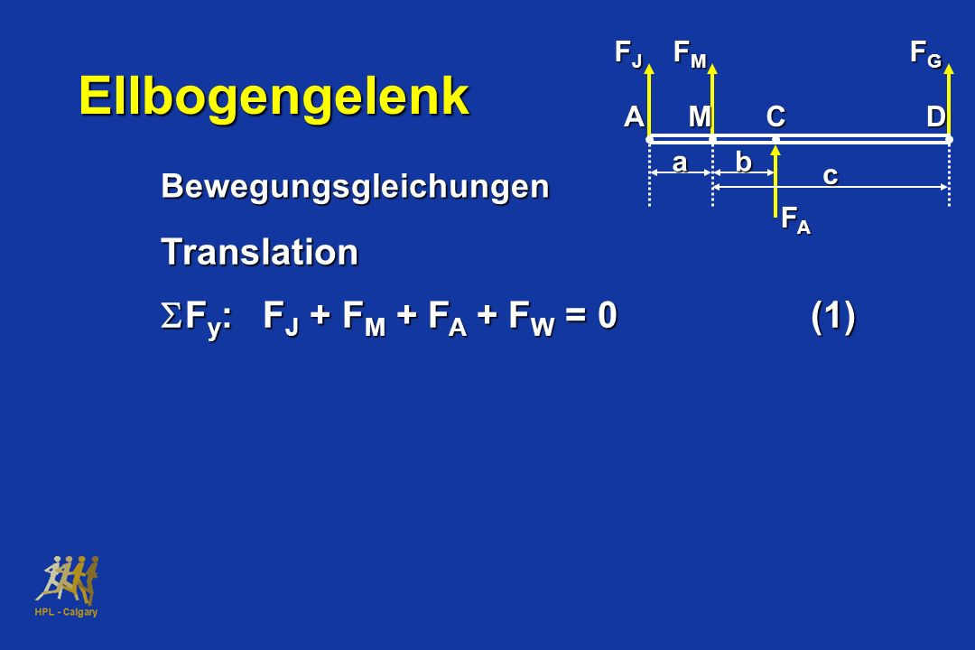 Ellbogengelenk Translation SFy: FJ + FM + FA + FW = 0 (1)