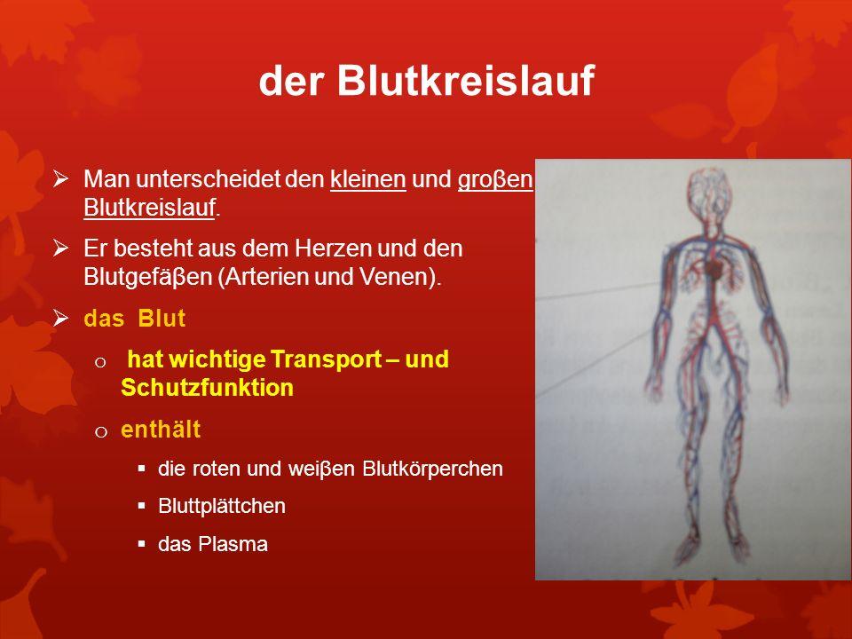 der Blutkreislauf Man unterscheidet den kleinen und groβen Blutkreislauf. Er besteht aus dem Herzen und den Blutgefäβen (Arterien und Venen).