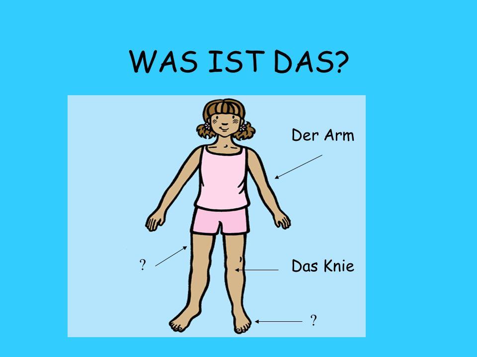 WAS IST DAS Der Arm Das Knie