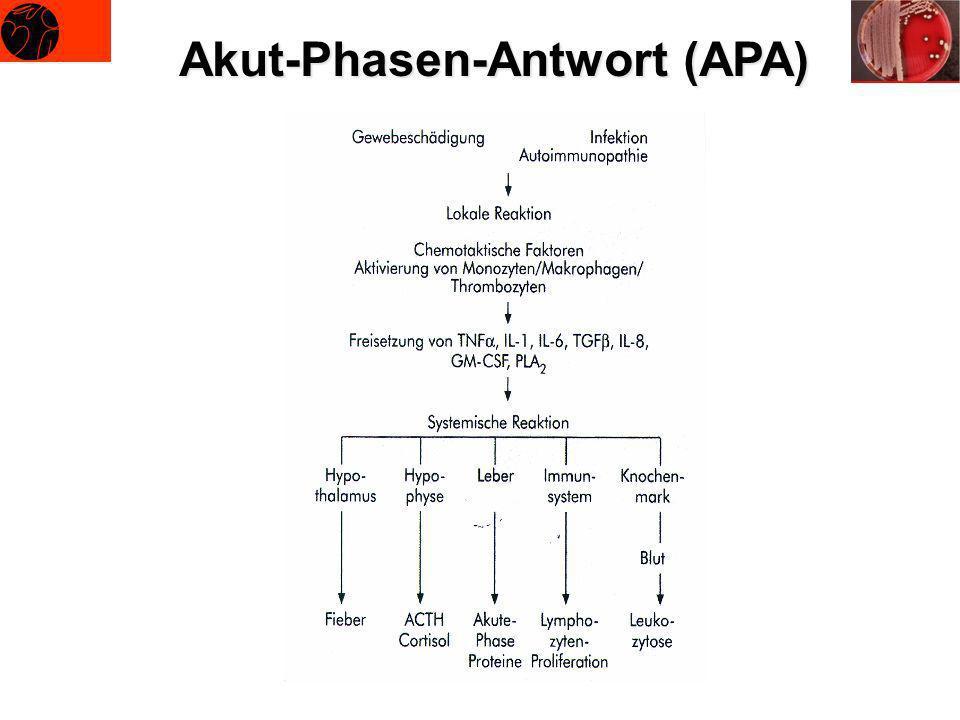 Akut-Phasen-Antwort (APA)