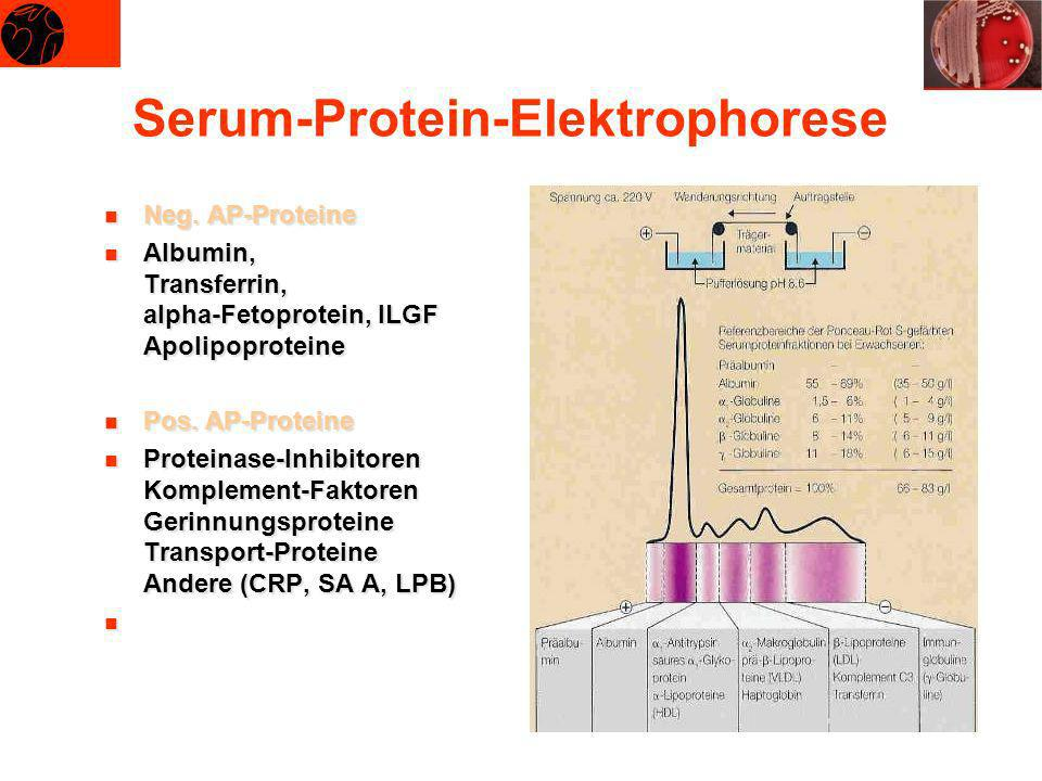 Serum-Protein-Elektrophorese