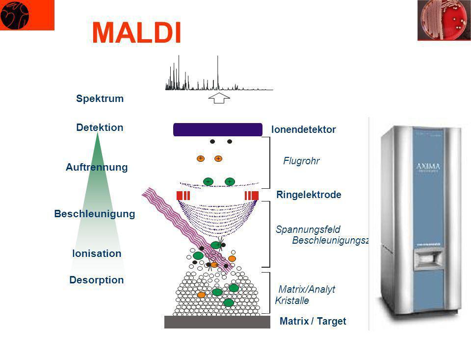 MALDI Spektrum Detektion Auftrennung Beschleunigung Ionisation