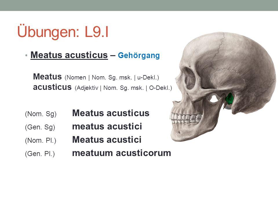 Übungen: L9.I Meatus acusticus – Gehörgang