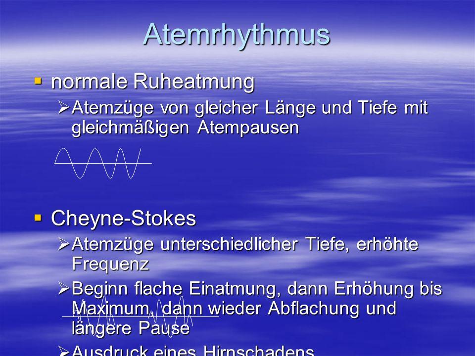 Atemrhythmus normale Ruheatmung Cheyne-Stokes