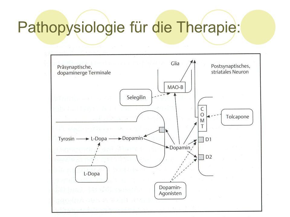 Pathopysiologie für die Therapie:
