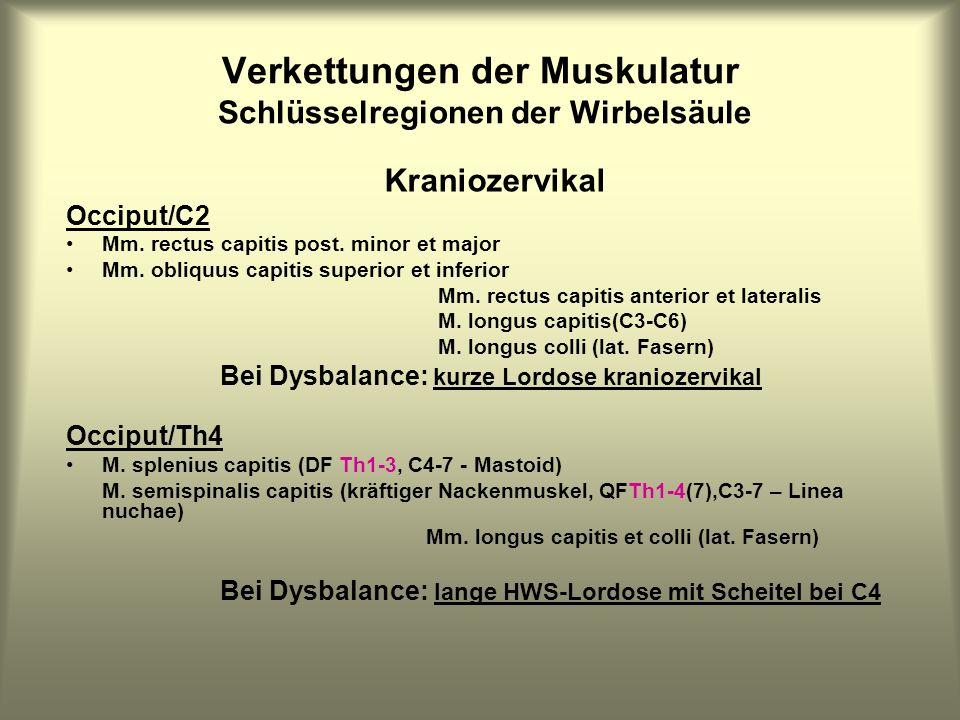 Verkettungen der Muskulatur Schlüsselregionen der Wirbelsäule