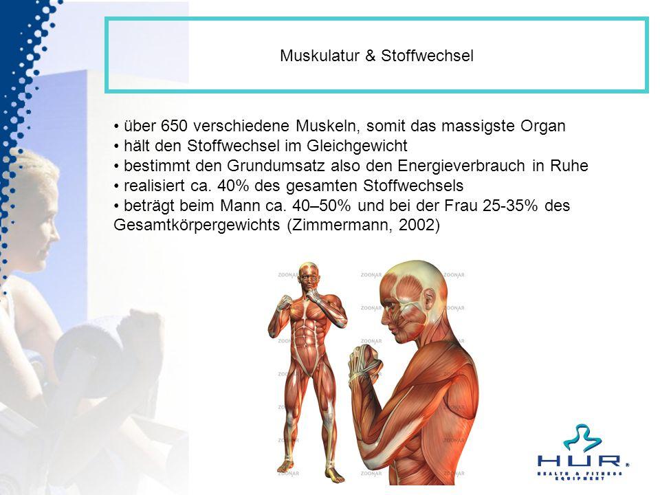 Muskulatur & Stoffwechsel