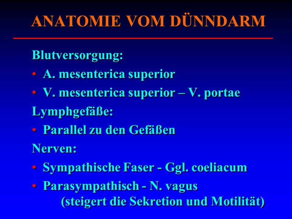 ANATOMIE VOM DÜNNDARM Blutversorgung: A. mesenterica superior