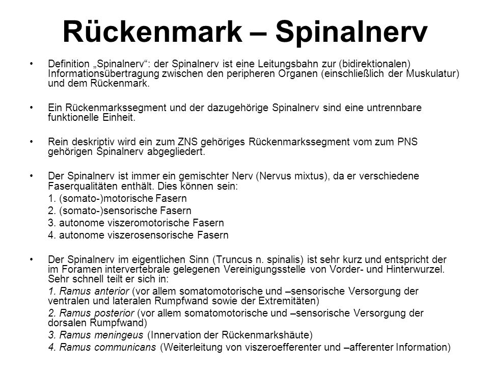 Rückenmark – Spinalnerv