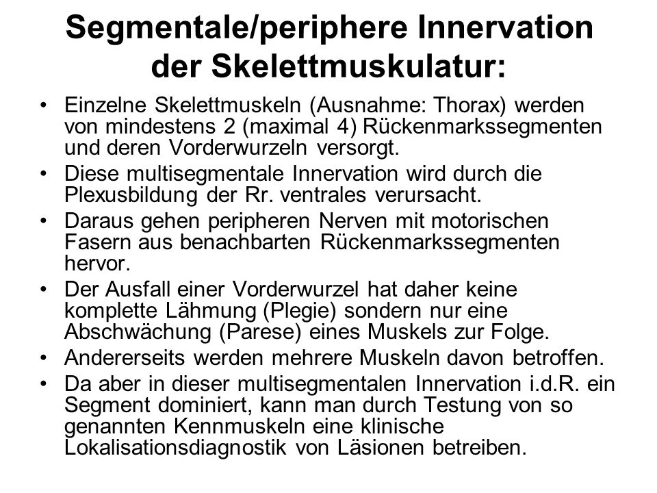 Segmentale/periphere Innervation der Skelettmuskulatur: