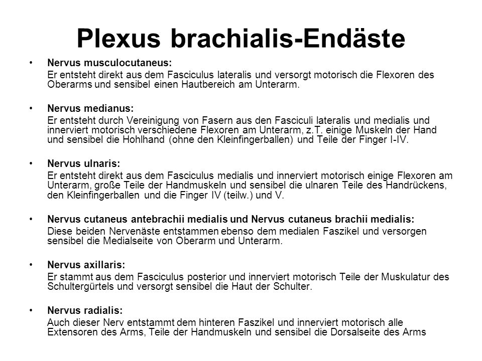 Plexus brachialis-Endäste