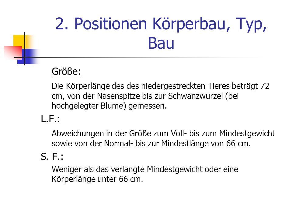 2. Positionen Körperbau, Typ, Bau