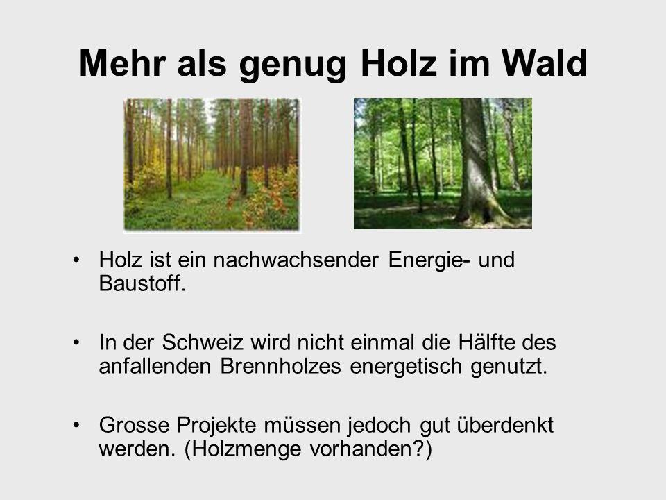 Mehr als genug Holz im Wald