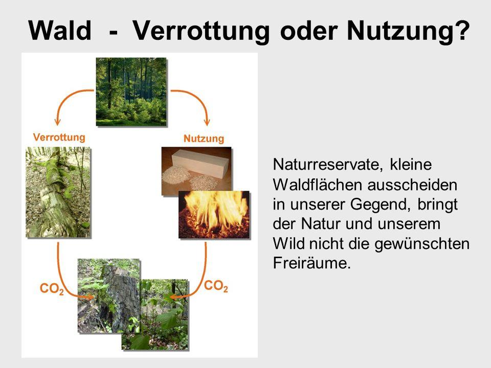 Wald - Verrottung oder Nutzung
