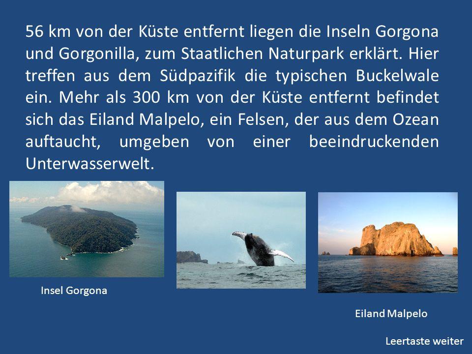56 km von der Küste entfernt liegen die Inseln Gorgona und Gorgonilla, zum Staatlichen Naturpark erklärt. Hier treffen aus dem Südpazifik die typischen Buckelwale ein. Mehr als 300 km von der Küste entfernt befindet sich das Eiland Malpelo, ein Felsen, der aus dem Ozean auftaucht, umgeben von einer beeindruckenden Unterwasserwelt.