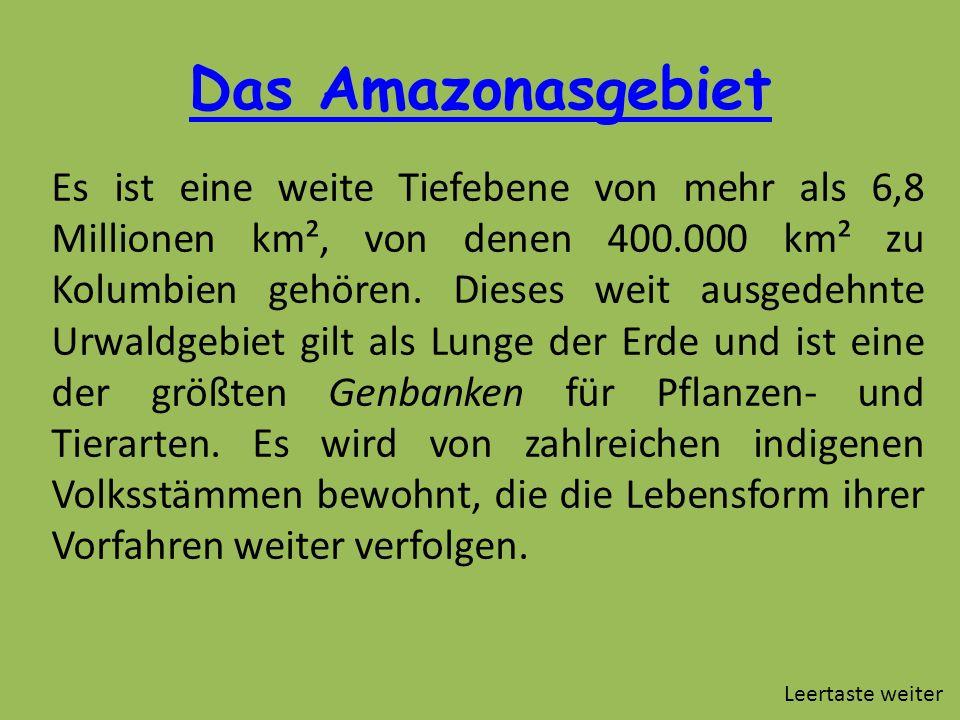 Das Amazonasgebiet