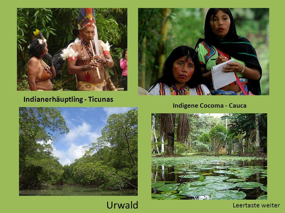 Indianerhäuptling - Ticunas Indigene Cocoma - Cauca