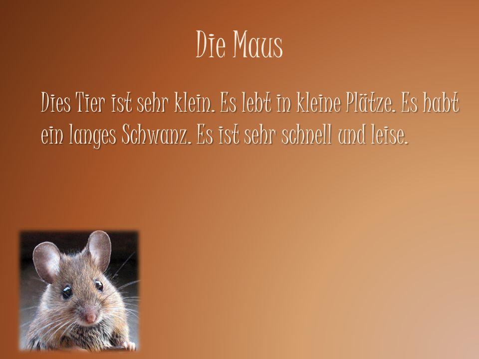 Die Maus Dies Tier ist sehr klein. Es lebt in kleine Plätze.