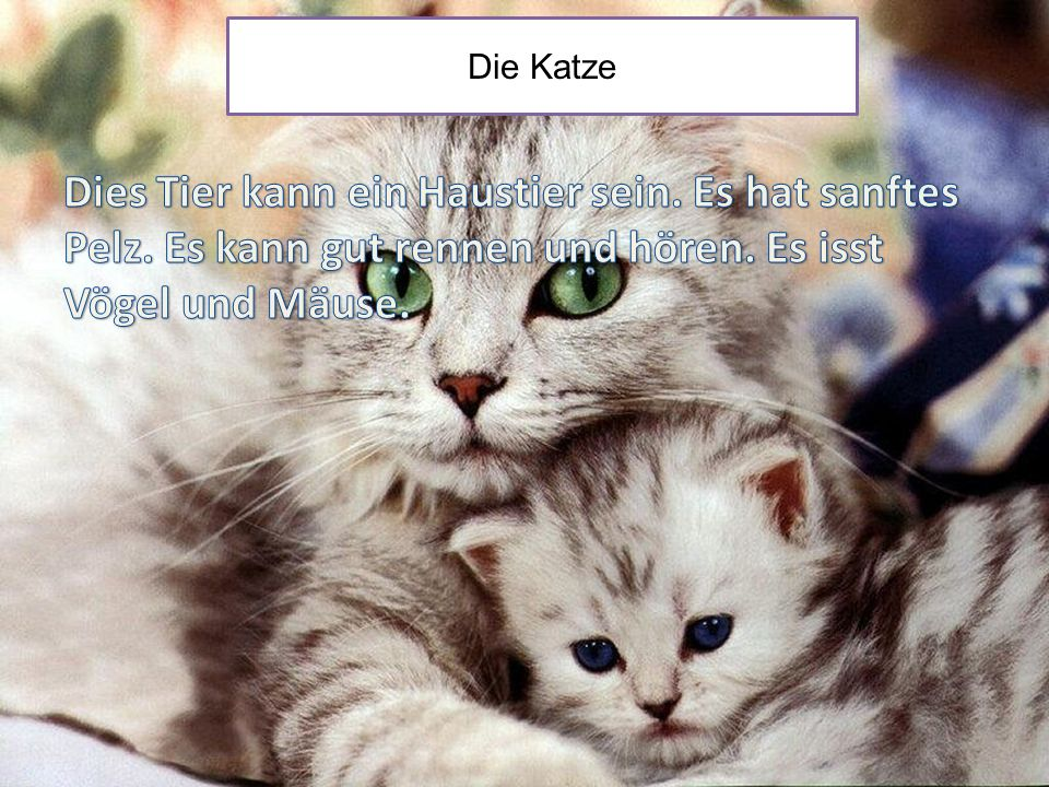 Die Katze Dies Tier kann ein Haustier sein. Es hat sanftes Pelz.
