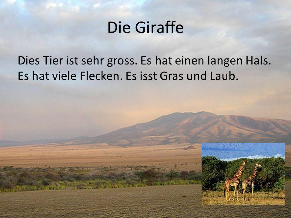 Die Giraffe Dies Tier ist sehr gross. Es hat einen langen Hals.