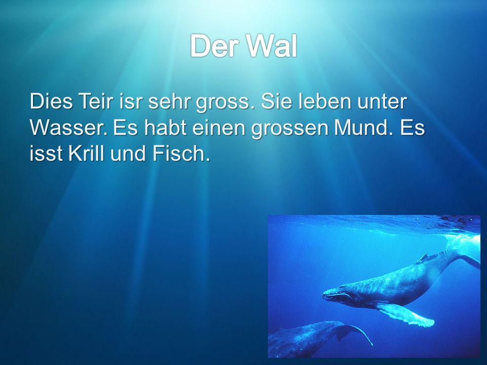 Der Wal Dies Teir isr sehr gross. Sie leben unter Wasser.