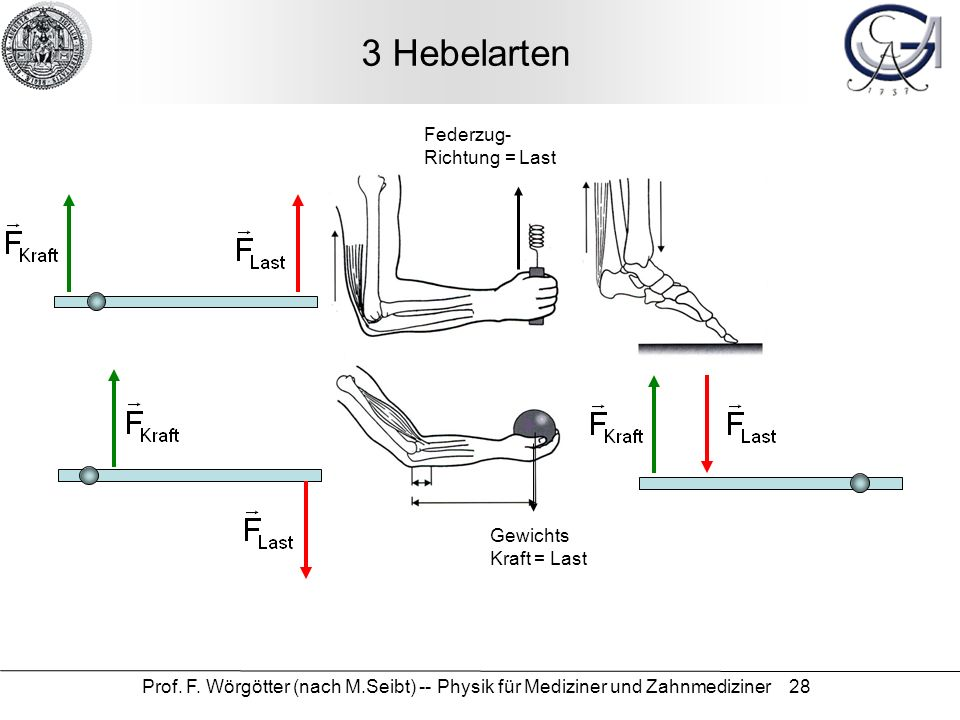 3 Hebelarten Federzug- Richtung = Last Gewichts Kraft = Last
