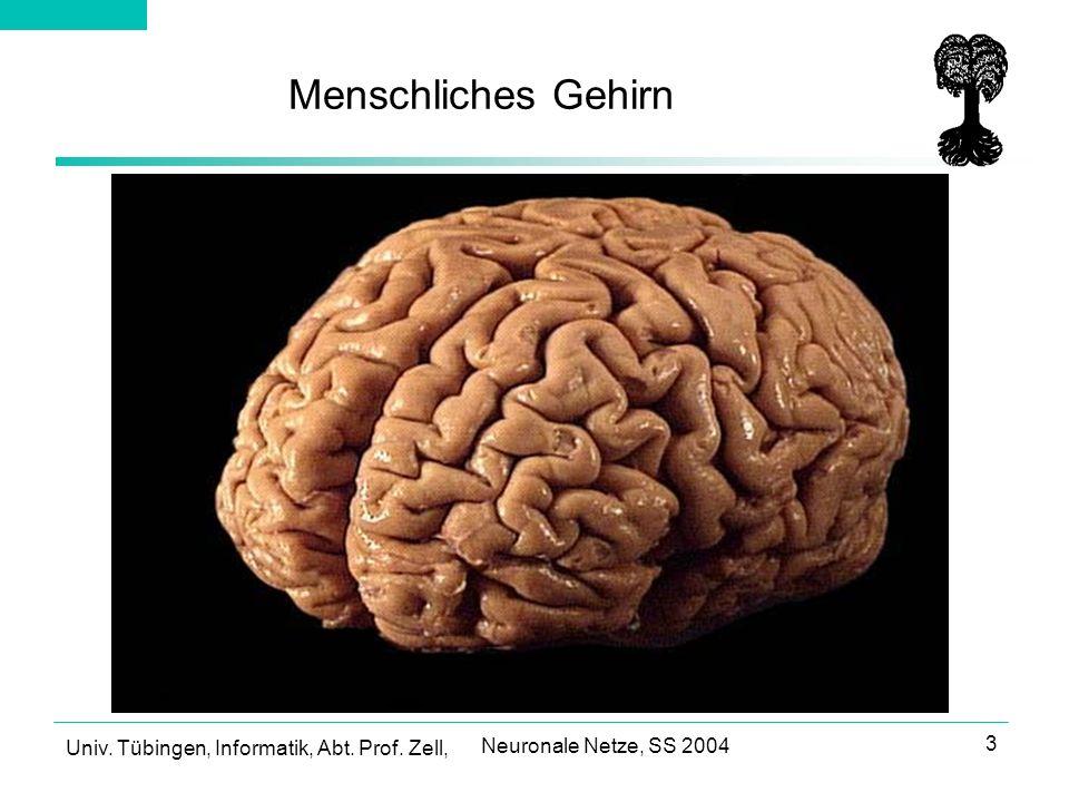 Menschliches Gehirn Neuronale Netze, SS 2004