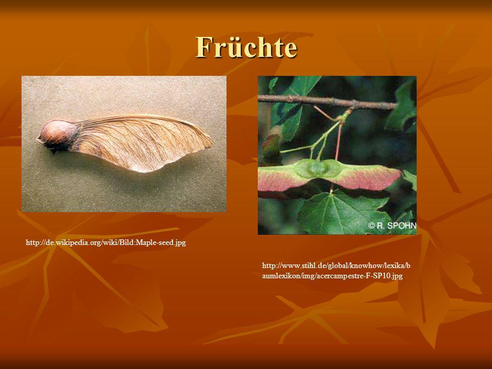 Früchte http://de.wikipedia.org/wiki/Bild:Maple-seed.jpg