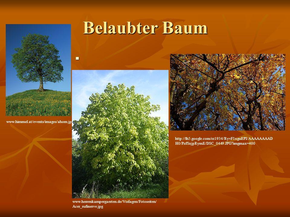 Belaubter Baum www.himmel.at/events/images/ahorn.jpg