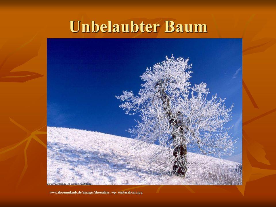 Unbelaubter Baum www.rhoenurlaub.de/images/rhoenline_wp_winterahorn.jpg