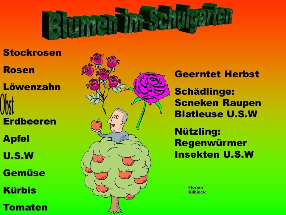 Blumen im Schulgarten Obst Stockrosen Rosen Löwenzahn Geerntet Herbst