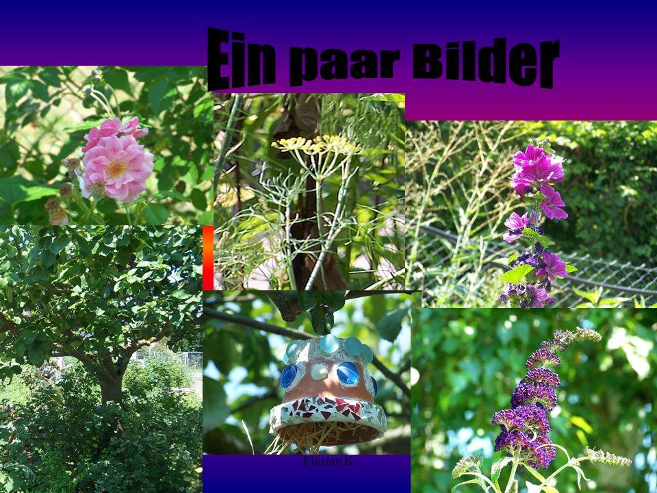 Ein paar Bilder Florian K