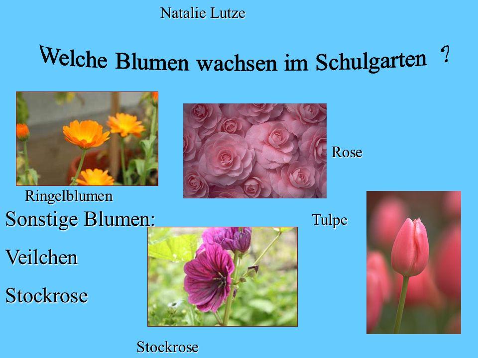 Welche Blumen wachsen im Schulgarten