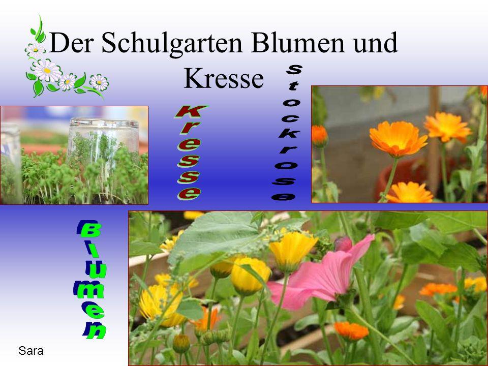 Der Schulgarten Blumen und Kresse